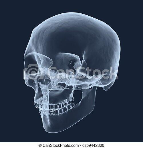 Röntgenkopfschädel - csp9442800