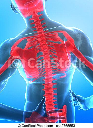 röntgenaufnahme, rückgrat, menschliche  - csp2765553