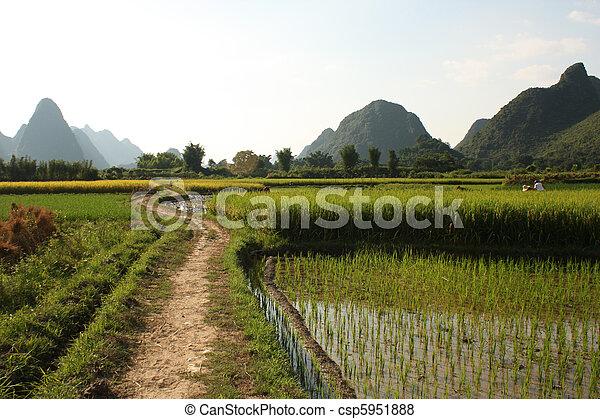 Reisfelder aus Porzellan - csp5951888