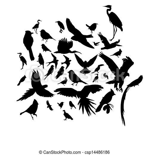 Ein paar Vögel - csp14486186