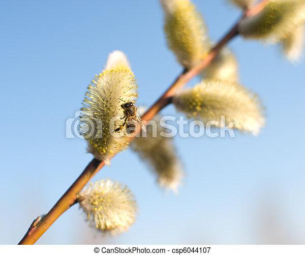 Schöne muschi weidet blumen und eine biene. Schöne muschi