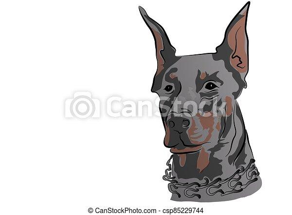 schauen, dobermann, groß, hund - csp85229744