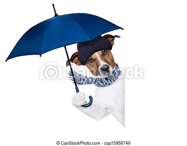 Regenschirmhund - csp15958749
