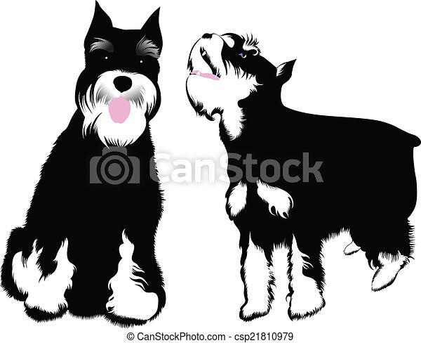 schnauzer, miniatur, hund - csp21810979