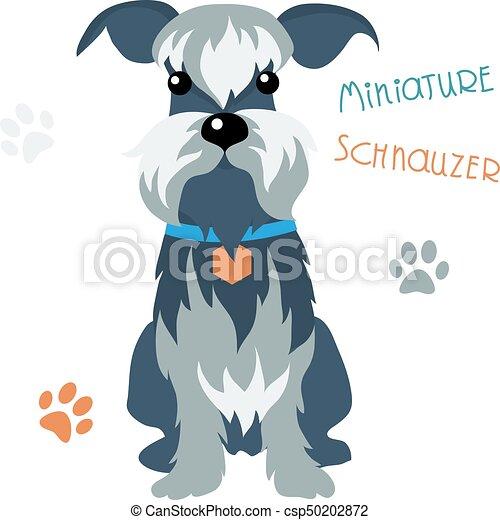 Miniatur-Schnauzer-Hund - csp50202872