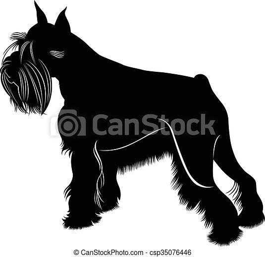 Miniatur-Schnauzer-Hund - csp35076446