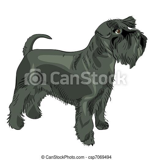 Vector Black Miniatur-Schnauzer-Hund - csp7069494