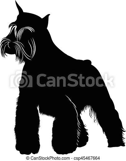 Miniatur-Schnauzer. Miniatur-Schnauzer-Hund. Auf weißem Hintergrund - csp45467664