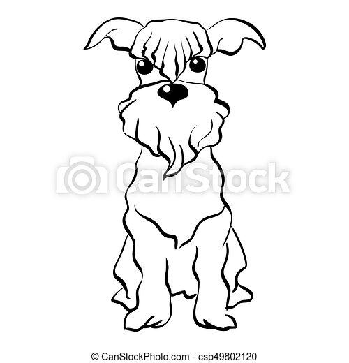 schnauzer, skizze, sitzen, hund, miniatur, vektor - csp49802120