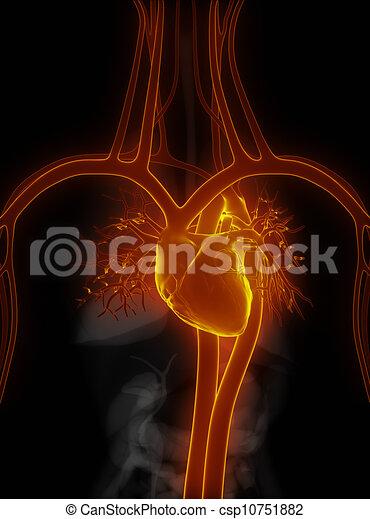 Herz-Kreislauf-System in Schwarz - csp10751882