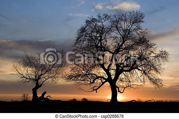 Silhouette von Bäumen - csp0288678