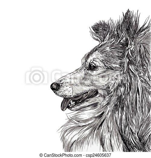 Sketch von siberianischem Hund. - csp24605637
