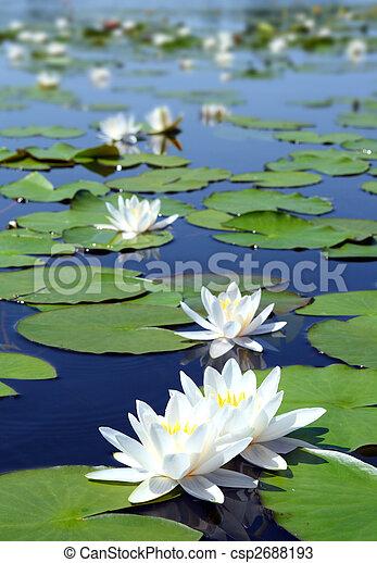 Sommersee mit Wasserrutschen - csp2688193