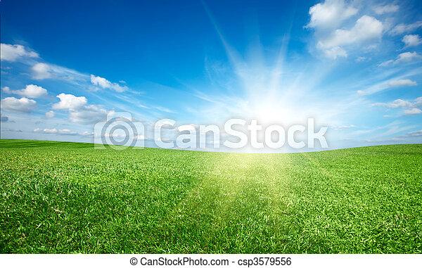 Sonne und grünes, frisches Gras unter blauem Himmel. - csp3579556