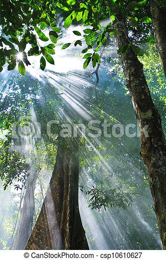 Sonnenlicht - csp10610627