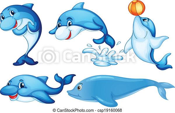 Spielende Delfine. - csp19160068