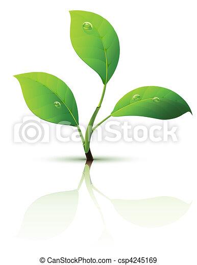 Sprümel mit grünen Blättern - csp4245169