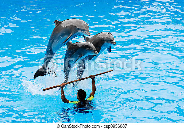 Springende Delfine - csp0956087