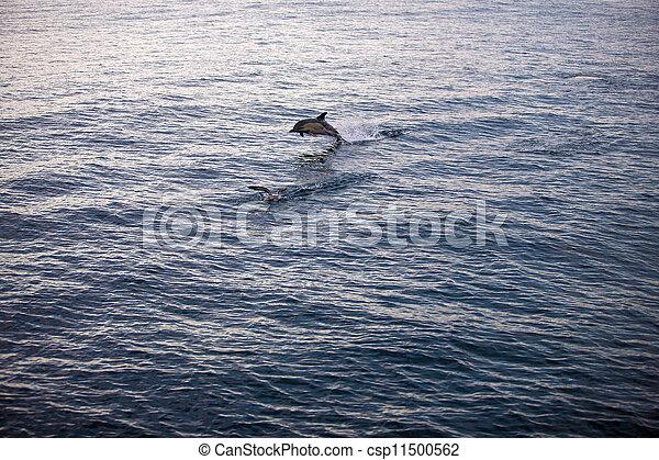 Springende Delfine - csp11500562