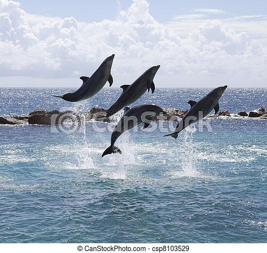 Springende Delfine. - csp8103529