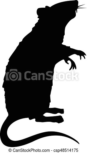 stehende , ratte, silhouette - csp48514175