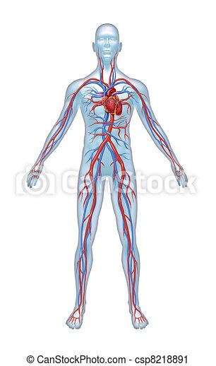 Menschliches Herz-Kreislauf-System - csp8218891