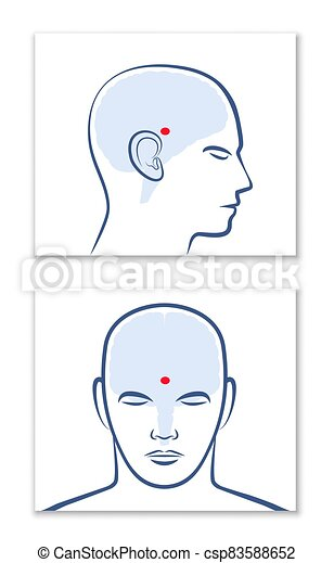 terz, gehirn, auge, pineal, position, koerperbau, epiphysis, drüse, cerebri - csp83588652