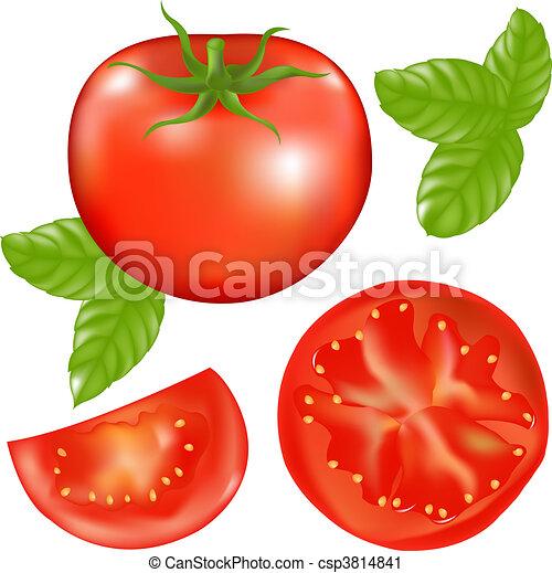 Tomate mit Tomaten- und Basilikumblättern - csp3814841