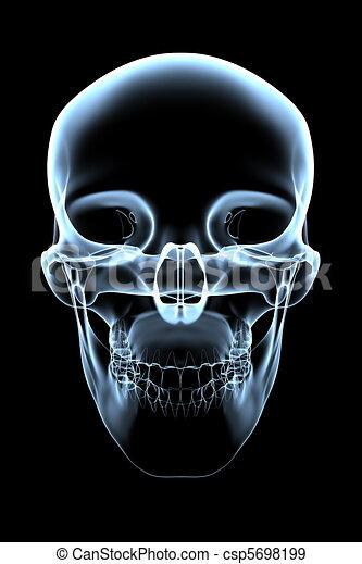 totenschädel, -, menschliche , front, röntgenaufnahme, ansicht - csp5698199