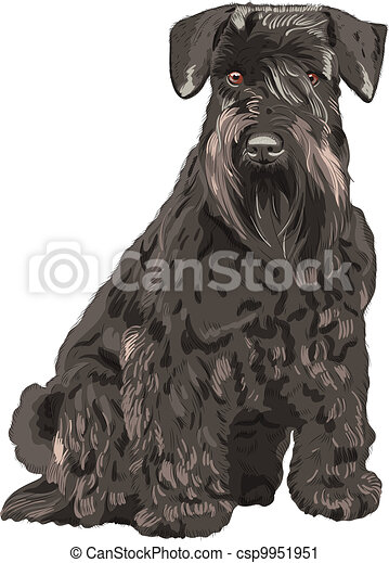 Vector Black Miniature Schnauzer-Hund sitzt - csp9951951
