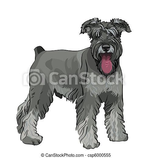 Vector Miniature Schnauzer-Hund mit heraushängender Zunge - csp6000555