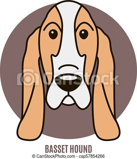 vektor, porträt, basset, abbildung, hound. - csp57854266