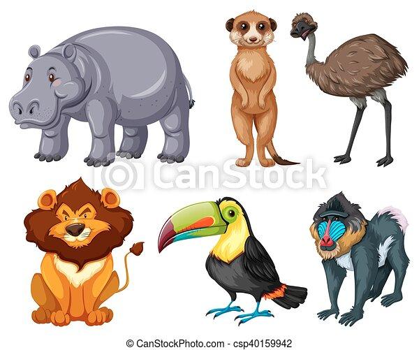 Verschiedene Arten von wilden Tieren. - csp40159942