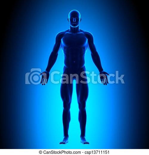 Voller Körper - Vorderseite - blaues Eis. - csp13711151