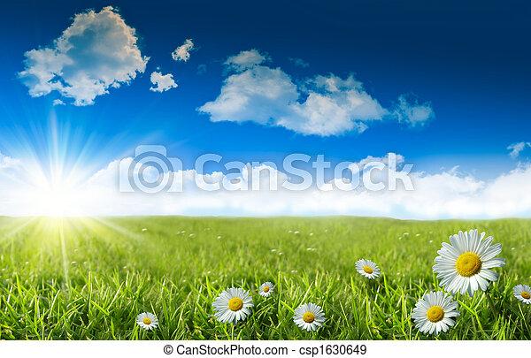 Wilde Gänseblümchen im Gras mit einem blauen Himmel - csp1630649