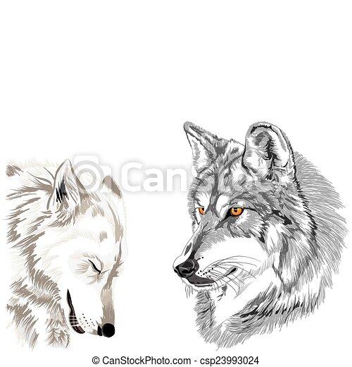 Wolves Muzzles Sketch. - csp23993024