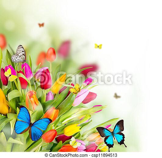 Wunderschöne Frühlingsblumen mit Schmetterlingen - csp11894513