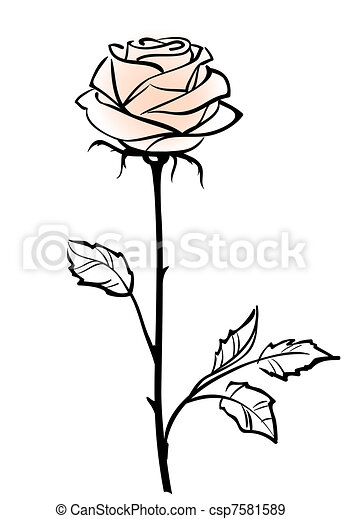 Wunderschöne, rosa Rosenblüte, isoliert im weißen Hintergrund, Vektor Illustration - csp7581589